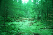 Part of the forest at The Hermitage, Dunkeld, Perthshire