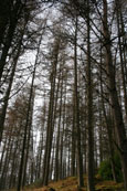 The forest at Bruar Falls, Bruar, Perthshire, Scotland