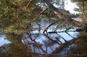 Reflections in the water and ice on Lairds Loch at Tullybaccart near Coupar Angus, Perthshire, Scotland